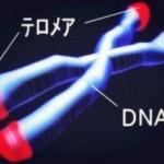 サーチュイン遺伝子はストレスを抑えうつ病を予防する