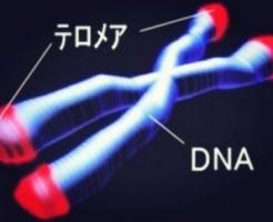 ストレスを抑えうつ病を予防するサーチュイン遺伝子