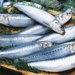 青魚を食べている人はうつ病になりにくい