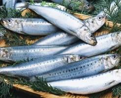 うつ病になりにくい人は青魚を食べている
