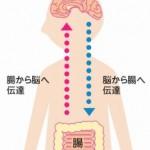 うつ病で下痢なら過敏性腸症候群かもしれない