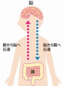 食物繊維が多い食事療法でうつ病を改善