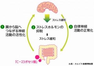 下痢型の過敏性腸症候群もうつ病もセロトニンが原因