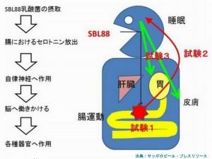 サッポロビールは乳酸菌がセロトニンを増やすことを発見