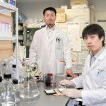 β-ヒドロキシ酪酸はうつ病を改善する|鳥取大学