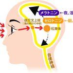 うつ病の睡眠障害を光目覚まし時計で改善