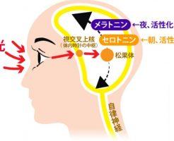 睡眠障害はうつ病の改善と同じ光目覚まし時計