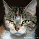 ネコのうつ病の6つの兆候