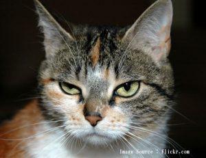 6つの兆候を見たらネコはうつ病です