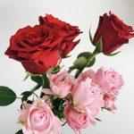 うつ状態にはバラの香りが効果がある
